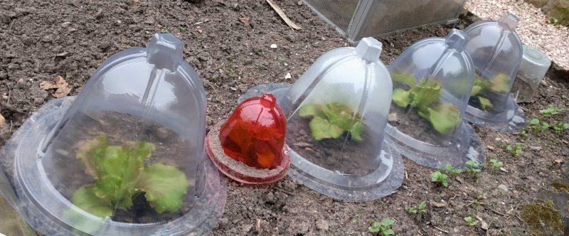 Projet plasturgie 2015 2016 cloche de croissance pour - Cloche en plastique transparent jardin ...